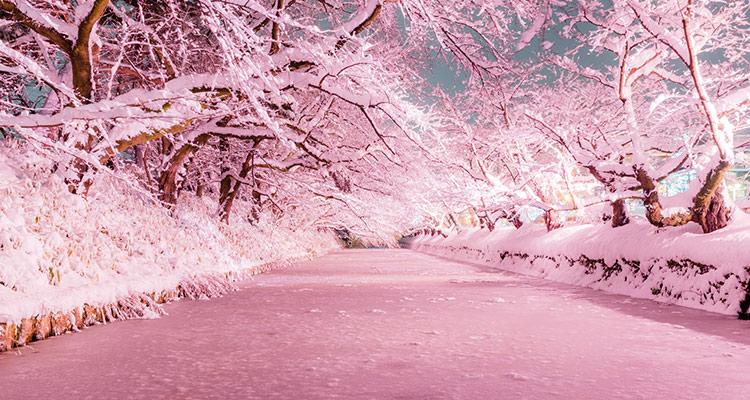 絶景に温泉、グルメも充実!冬の東北はこんなに魅力的! | びゅう ...