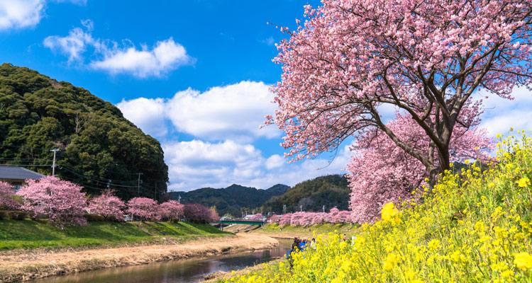 2021年、春におすすめの国内旅行! 五感いっぱいに春を感じる旅へ ...